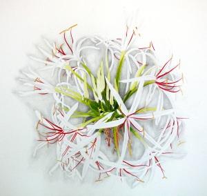Crinum asiaticum, watercolor, 20
