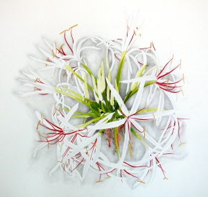 Crinum asiaticum, watercolor, 20