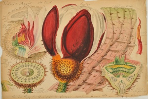 Victoria regia by Carl Ulke. Image courtesy of Crispian Riley-Smith Fine Arts Ltd. All rights reserved.