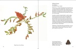 Winged Sumac by Rose Pellicano. Image courtesy Starbooks.