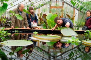 Greenhouse Supervisor, Alex Summers, looking under the lilypad.