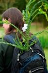 Shop the Plant Promenade. © Cambridge University Botanic Garden