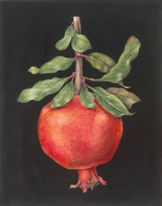 "Pomegranate, watercolor, 16.25"" x 20"" © Sally Jacobs, All rights reserved"