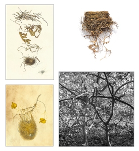 "Clockwise from above left: Assemblage, watercolor and pencil on Kelmscott vellum by Kate Nessler, 2014, 30.5 × 22"", © 2014 Kate Nessler, All rights reserved; Bird Nest Series No.1, colored pencil on paper by David Morrison, 2014, 13 × 19"", © 2014 David Morrison, All rights reserved; Woven Trees, archival ink-jet print from 2.25 film negative by Sue Abramson, 2014, 24 × 24"", © 2014 Sue Abramson, All rights reserved; Epilogue, watercolor on Cowley's veiny calfskin vellum by Wendy Brockman, 2014, 27 × 23"", © 2014 Wendy Brockman, All rights reserved."