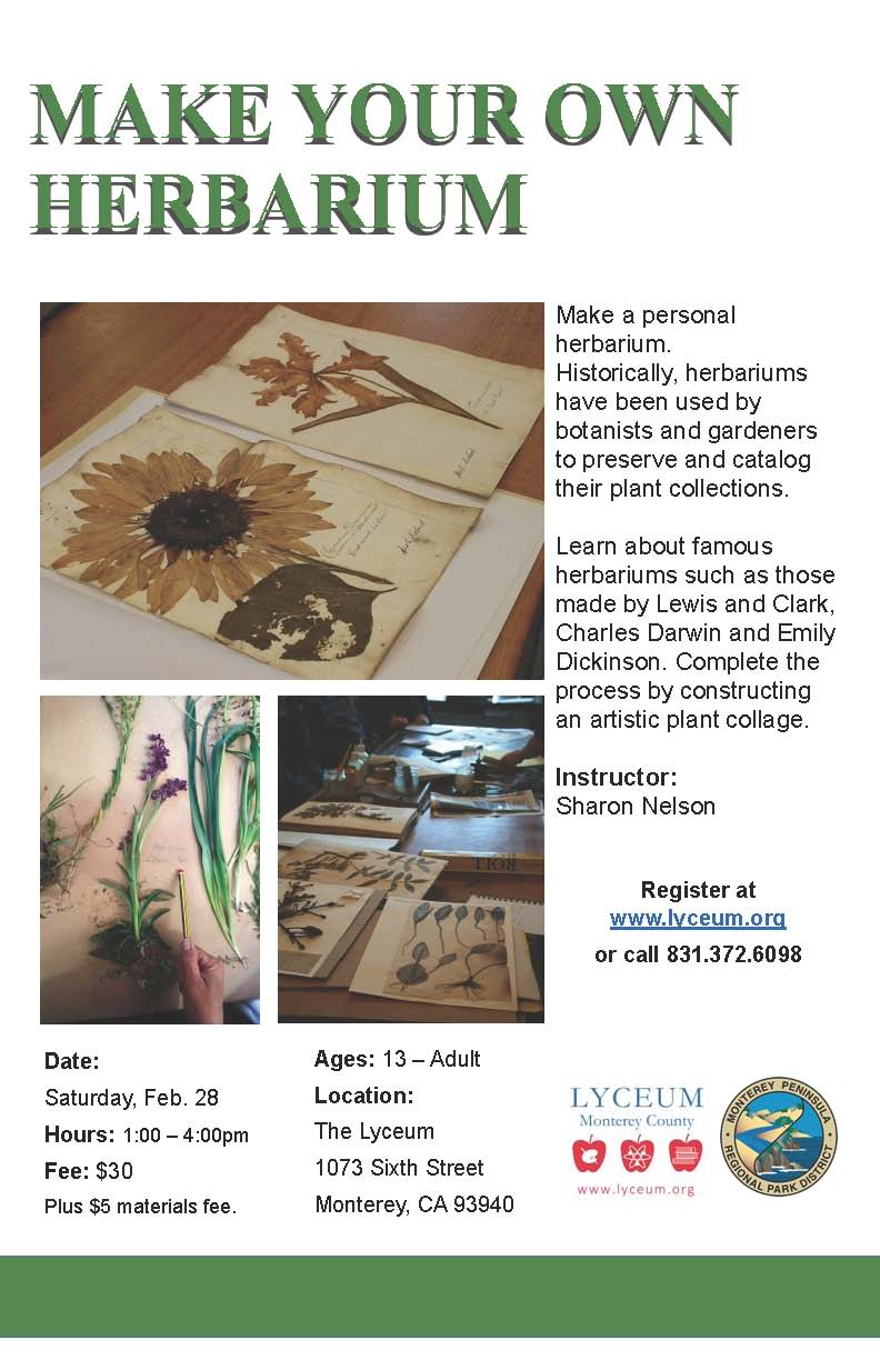 How to make a herbarium with your own hands Herbarium in biology. Herbarium of leaves 84