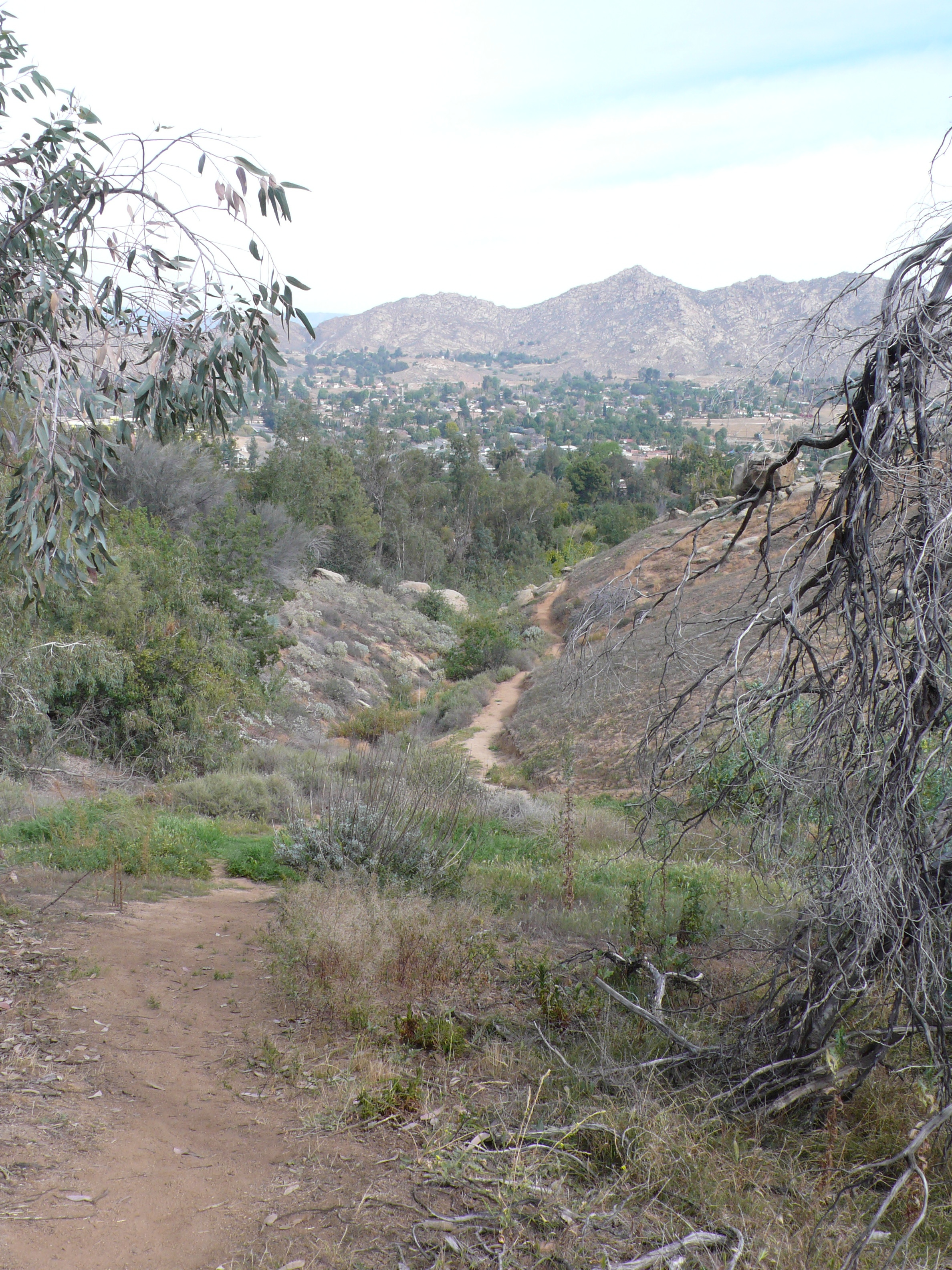 Canyon Views At UCR Botanic Gardens