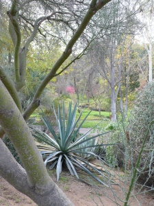 View of Alder Canyon at UC Riverside Botanic Gardens.