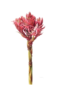 © Beverly Allen, all rights reserved Born Sydney, Australia, 1945