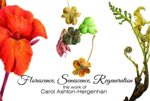 "Canna 'Phaison"", Amaryllis 'Candy Cane', Onoclea sensibilis ""Sterile Rebirth"". All images © 2014 Carol Ashton-Hergenhan"