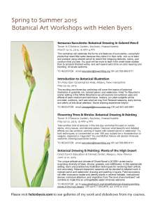 Helen Byers Botanical Art Workshops 2015