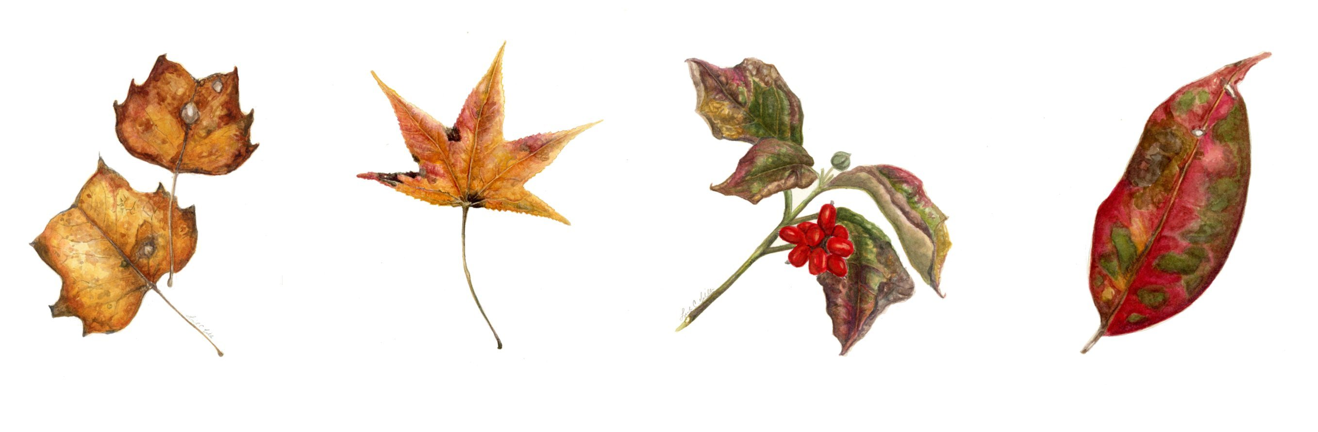 Create a nature journal of autumn leaves | ArtPlantae