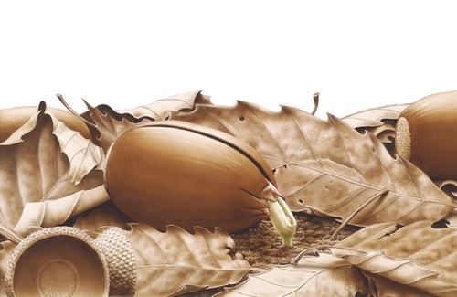 Donguri [Acorn, Quercus Linnaeus, Fagaceae], acrylic, gouache and pencil on paper by Kieta Yonezu (1943–), 1982, 30 × 46 cm, for Rureberukan, Donguri (Chiyodaku, Tokyo, Kanda Ogawamachi, 1983), HI Art accession no. 6838.
